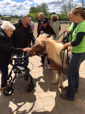 Residents petting the horse.